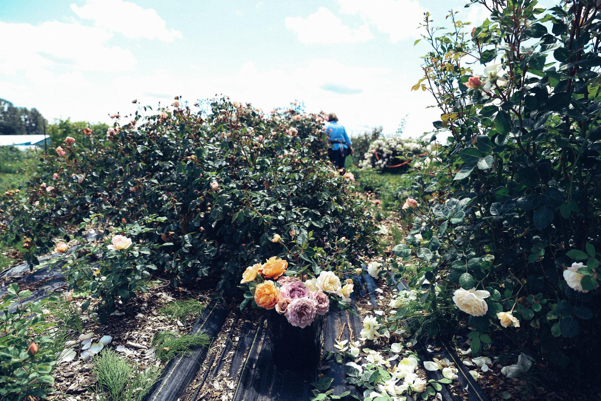 Oh Flora Travels, Floret 2017-57.jpg