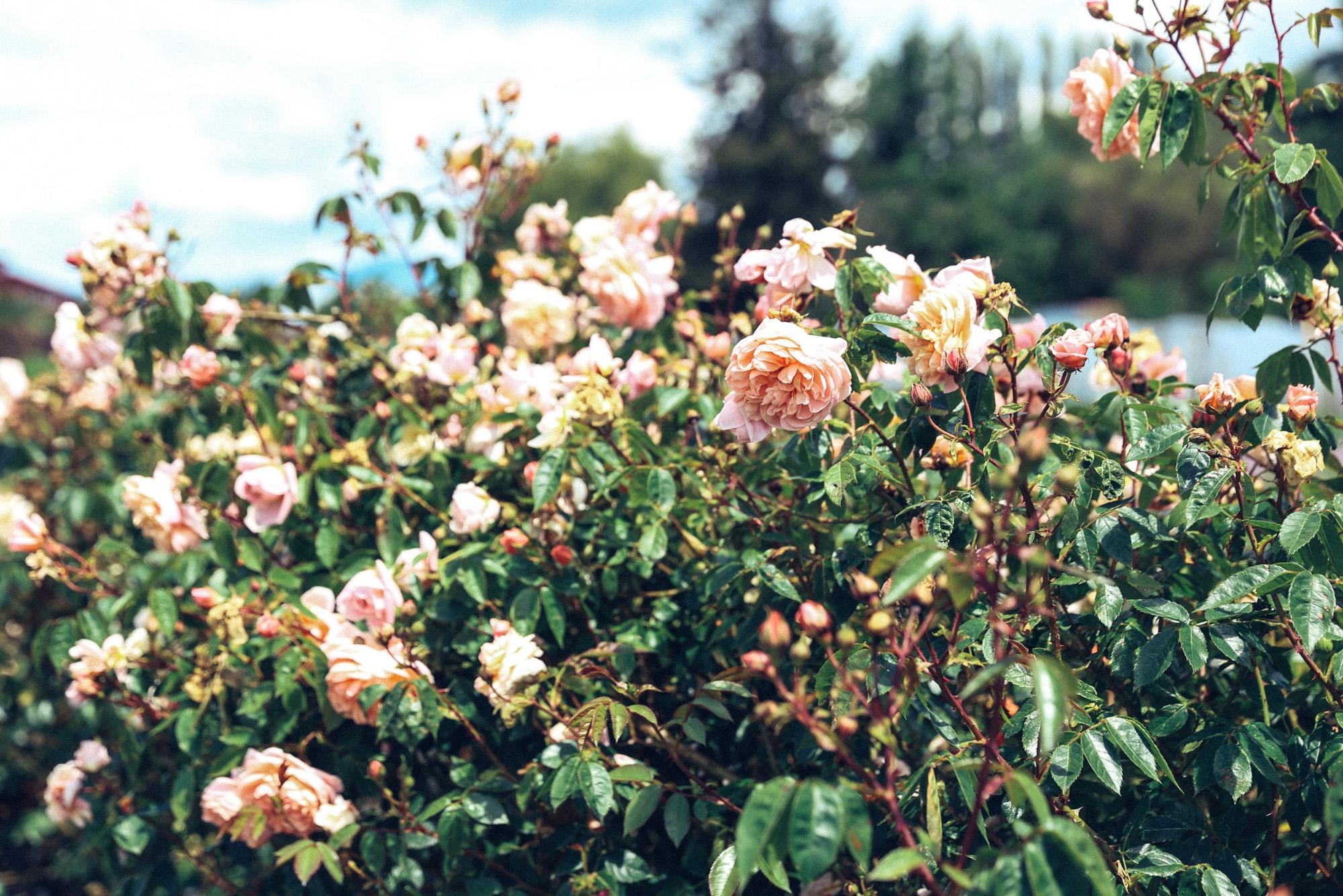 Oh Flora Travels, Floret 2017-60.jpg
