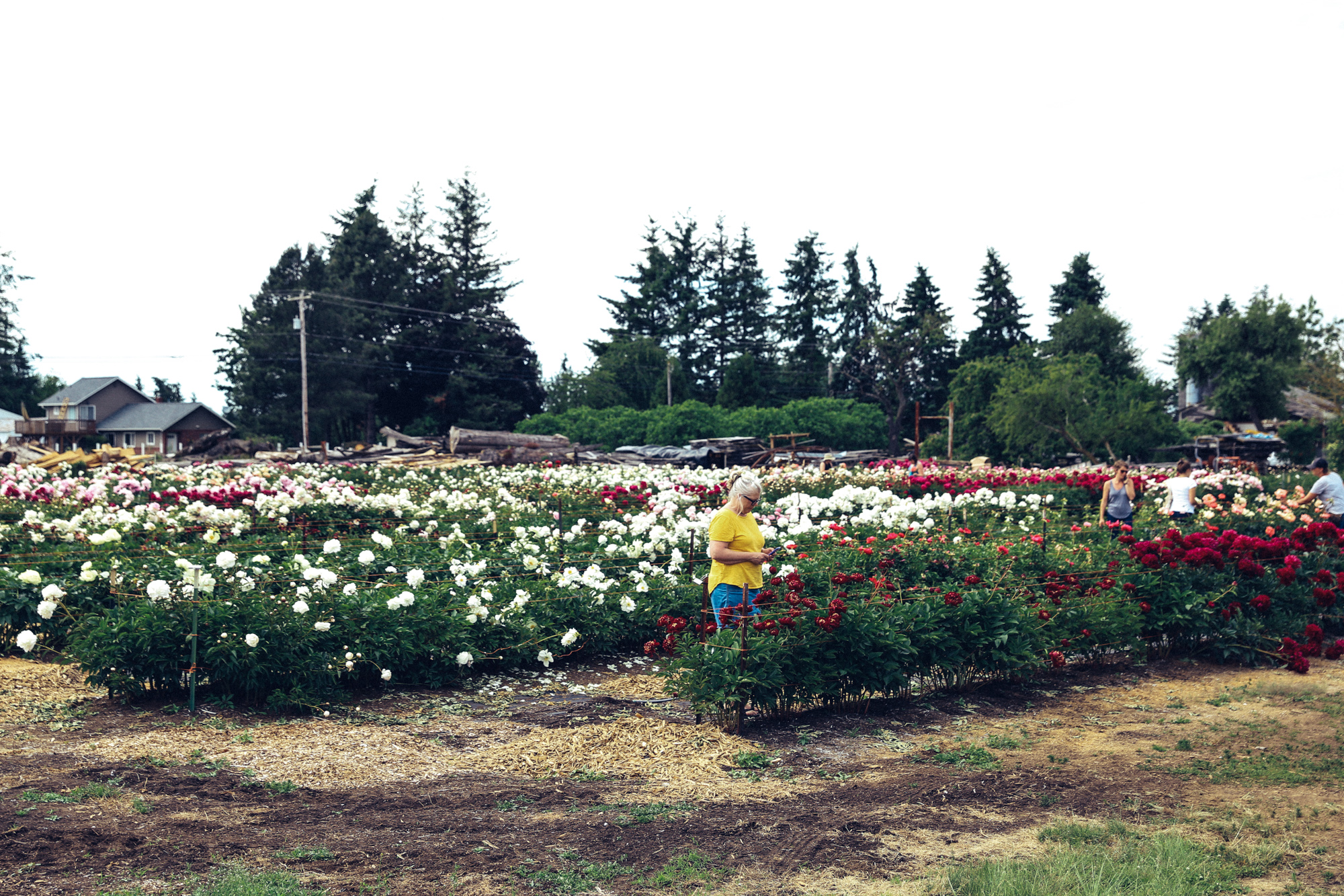 PNW Peony Farm - Oh Flora Travels-1.jpg