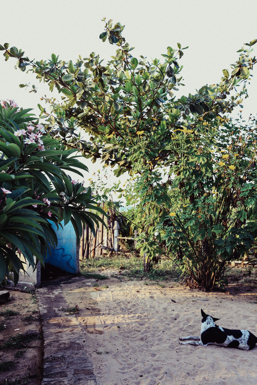 Sri Lanka - Oh Flora Travels-16.jpg