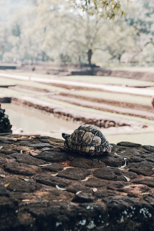 Sri Lanka - Oh Flora Travels-5.jpg