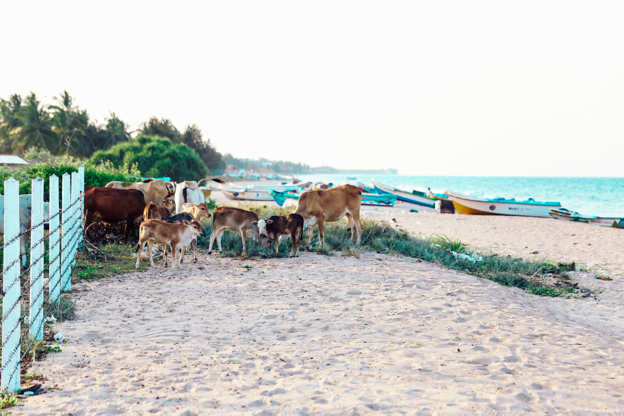 Sri Lanka - Oh Flora Travels-28.jpg
