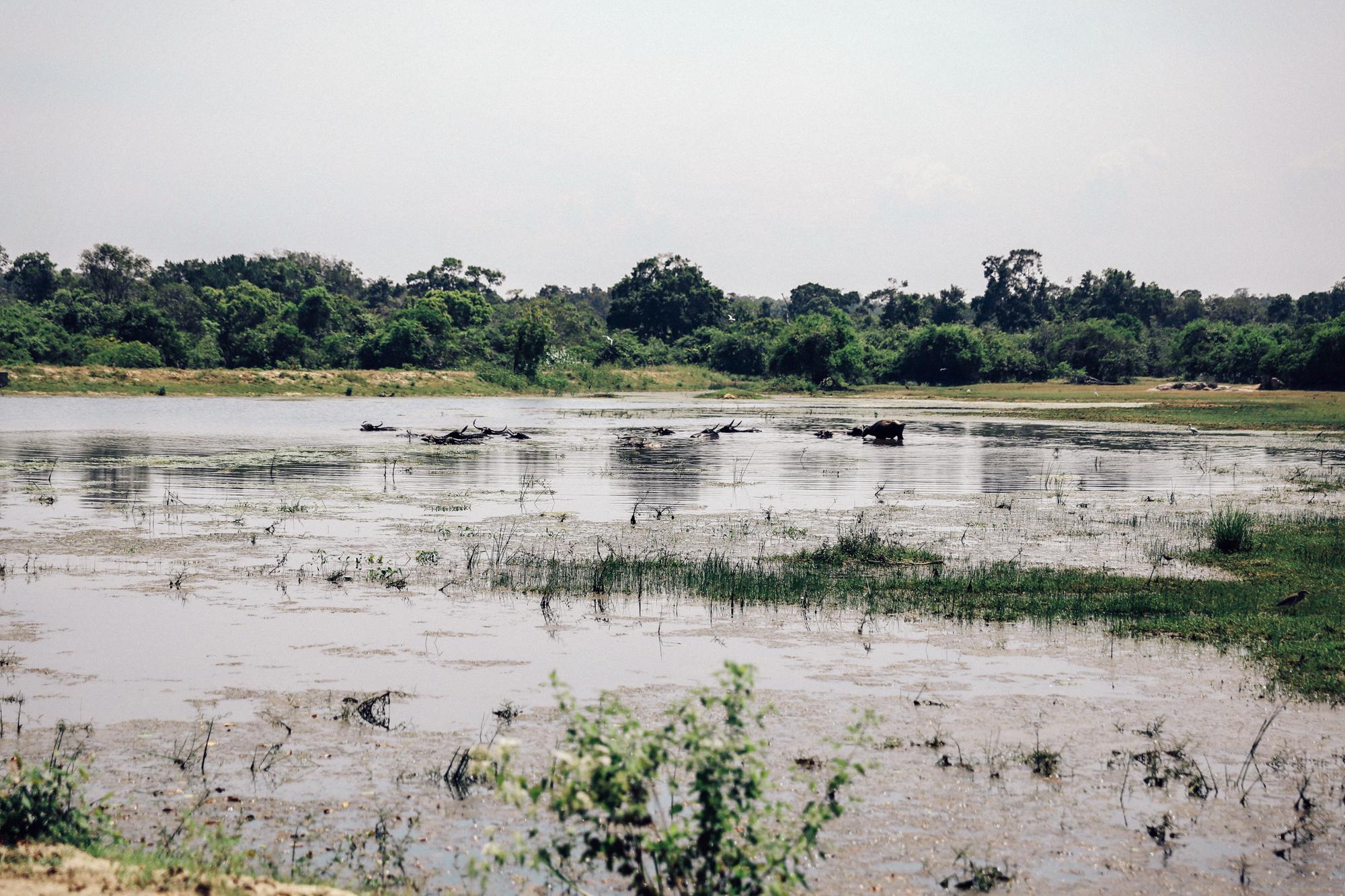 Sri Lanka - Oh Flora Travels-39.jpg