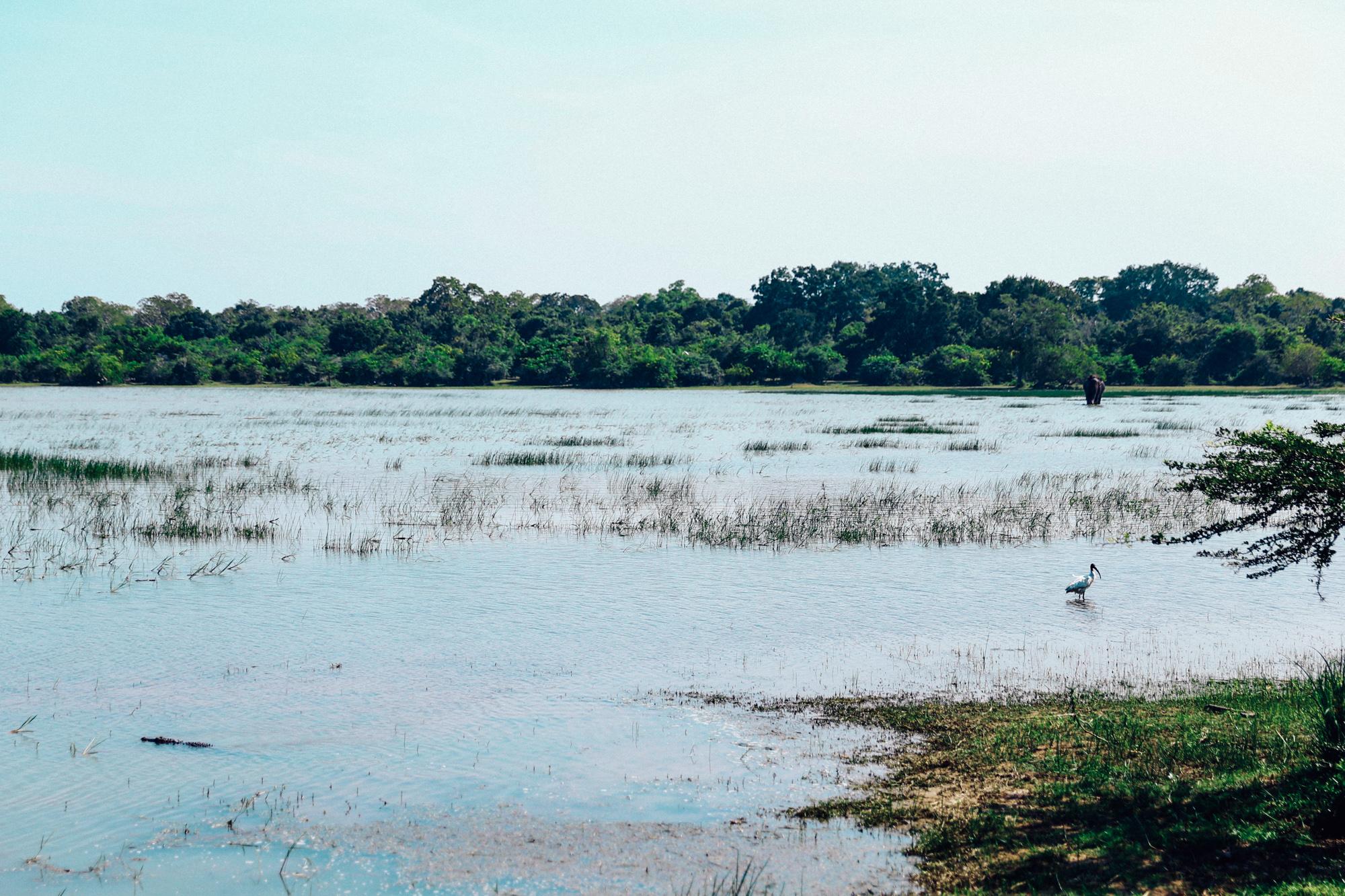 Sri Lanka - Oh Flora Travels-43.jpg