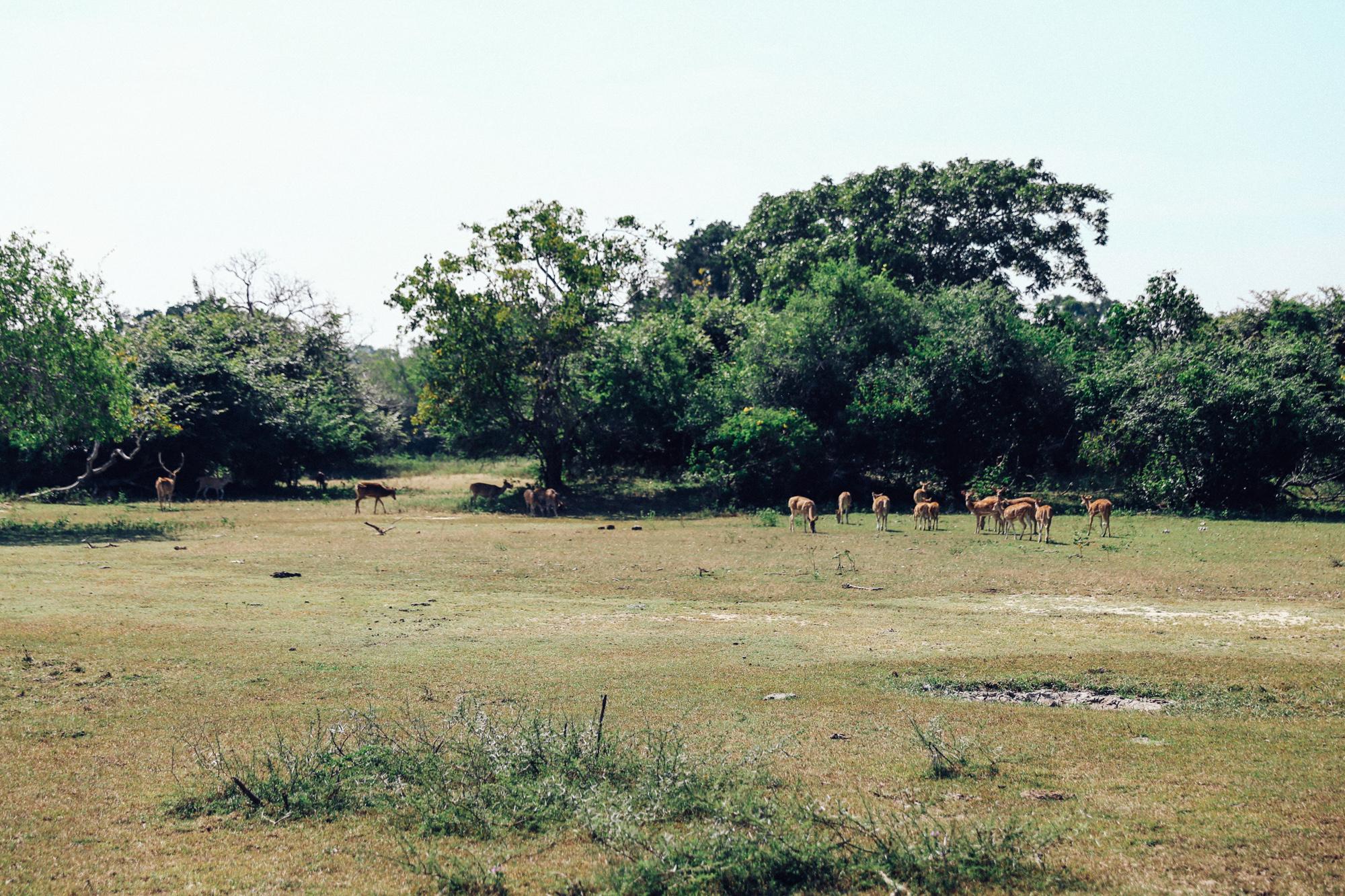 Sri Lanka - Oh Flora Travels-42.jpg