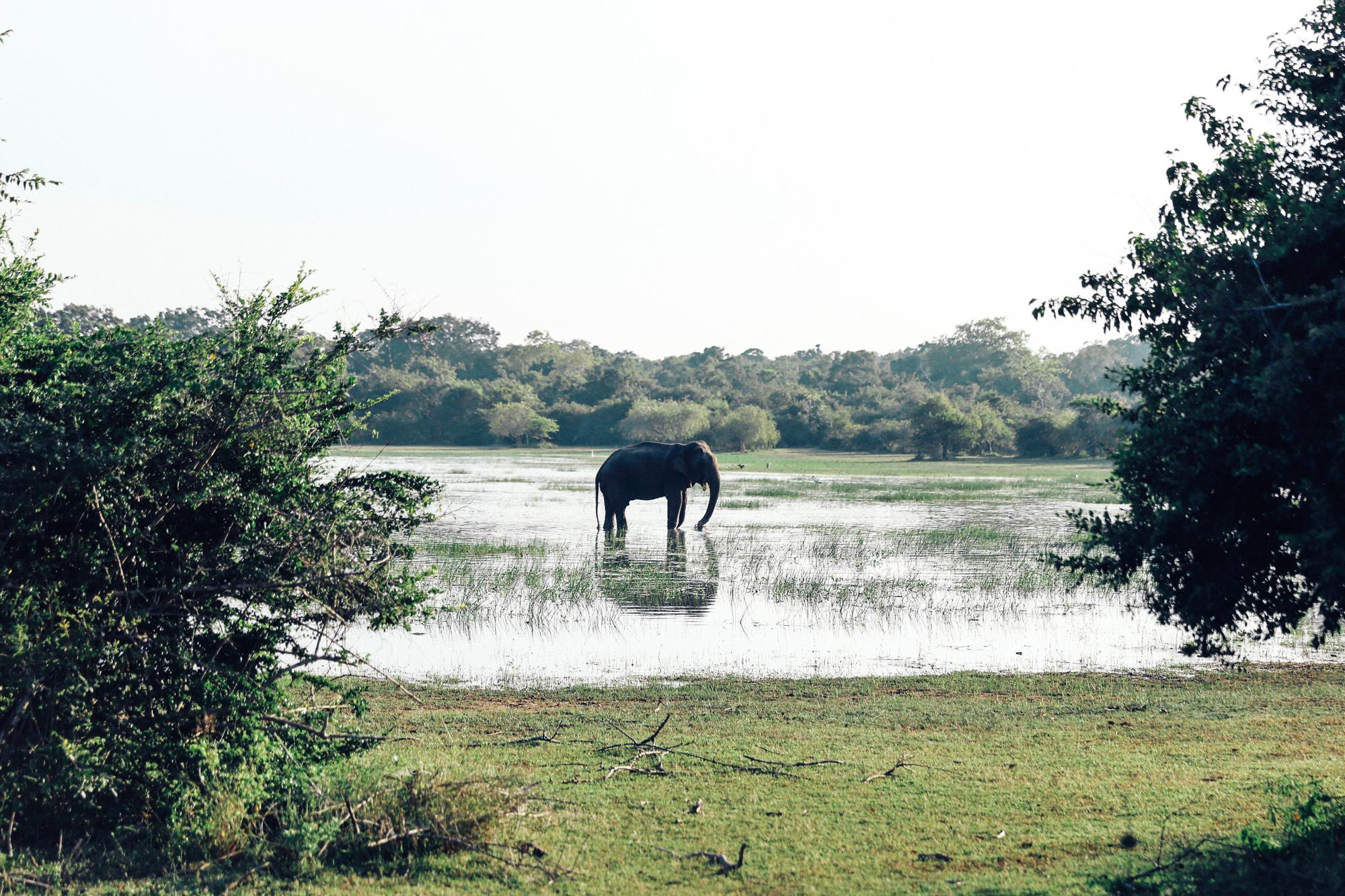 Sri Lanka - Oh Flora Travels-48.jpg