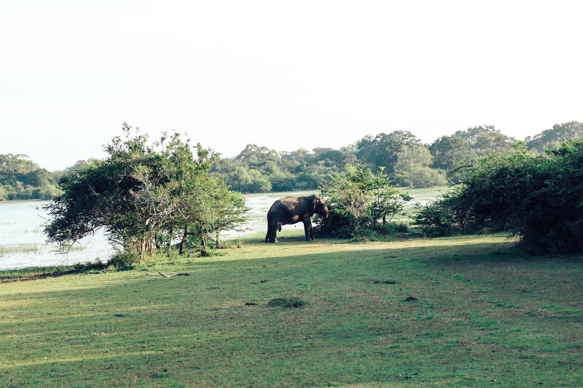 Sri Lanka - Oh Flora Travels-51.jpg