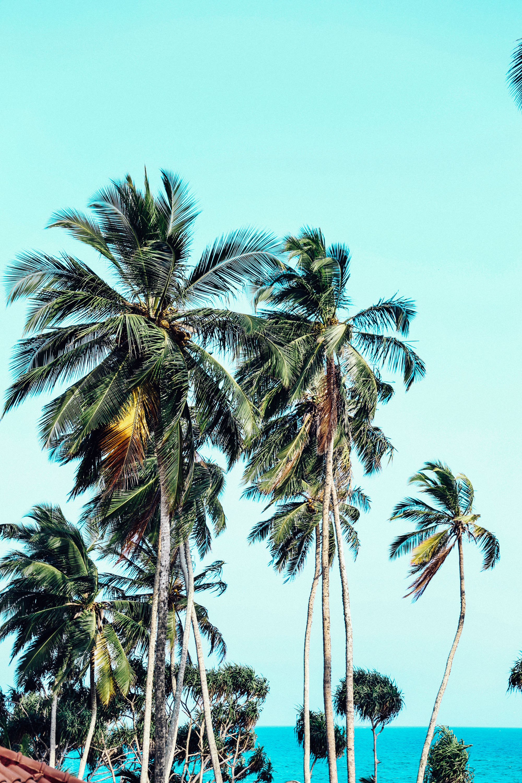 Sri Lanka - Oh Flora Travels-56.jpg