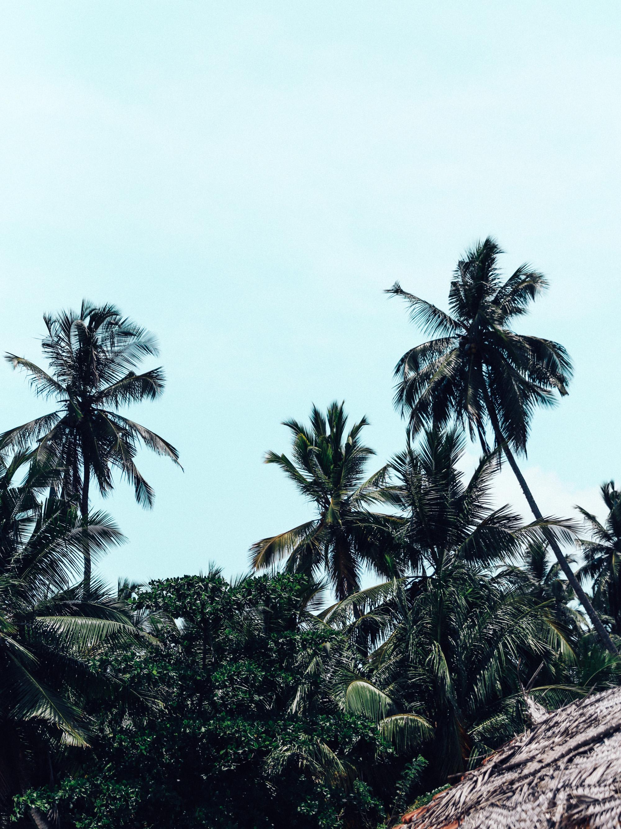 Sri Lanka - Oh Flora Travels-71.jpg