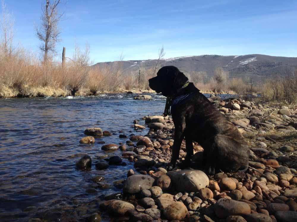 Marley spots a rising fish.
