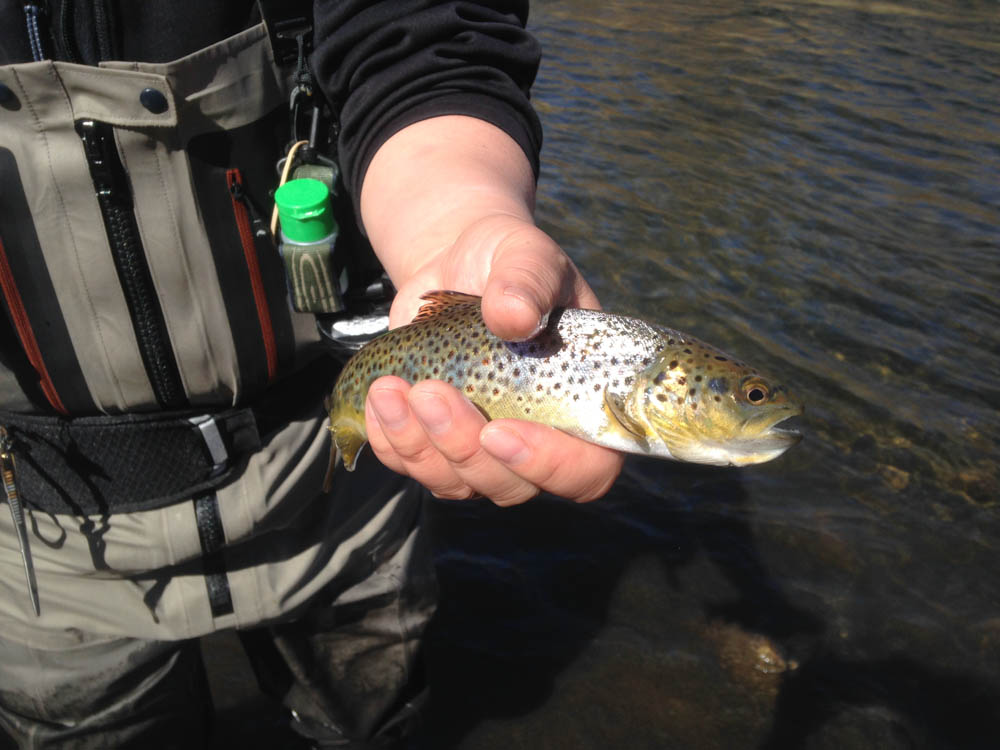 I picked up a few little browns