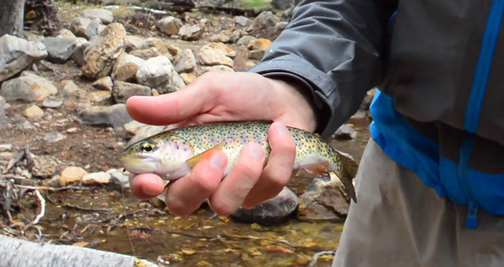 Lance holding a vibrant rainbow