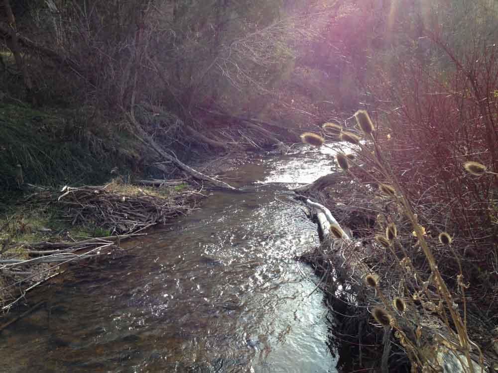 50-50 creek-15.jpg