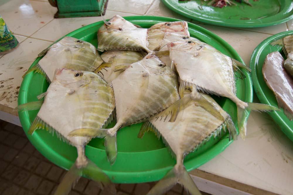 Hoi An fish 1.jpg