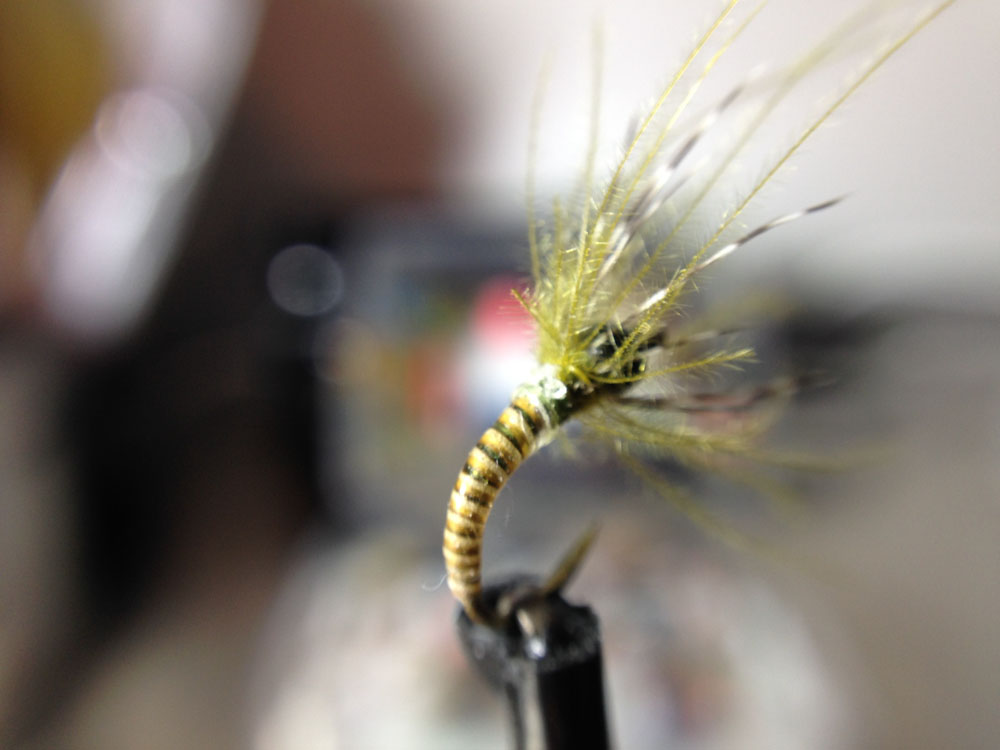 Bud's fly 3-14.jpg