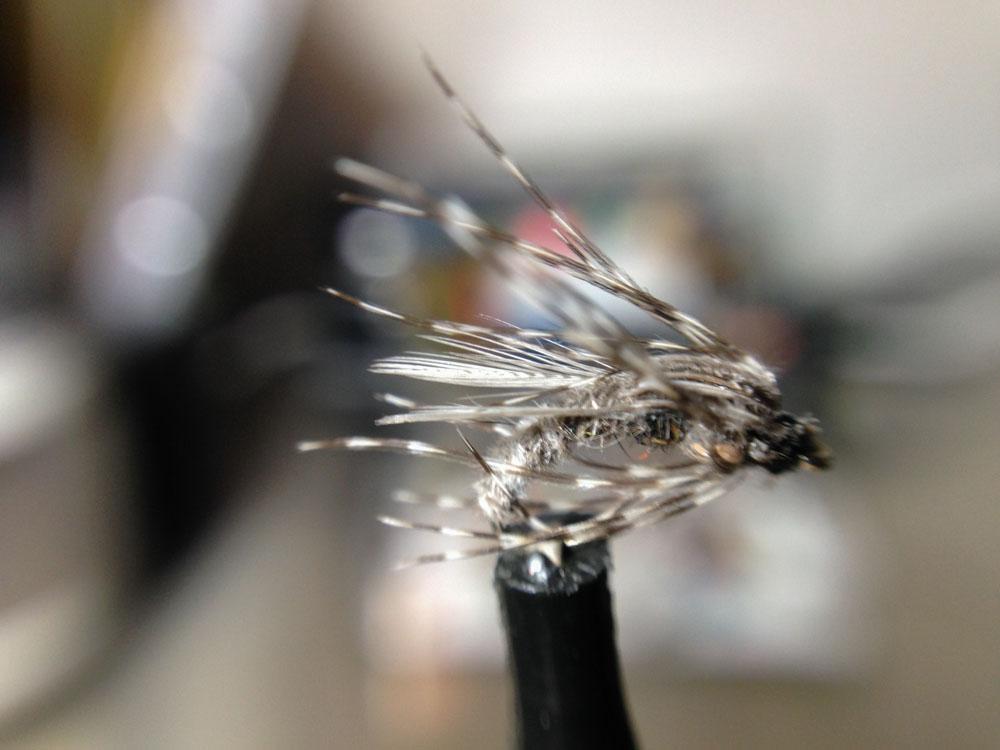 Bud's fly 4-6.jpg