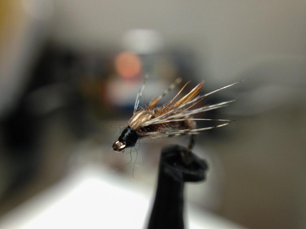 Bud's fly 4-15.jpg