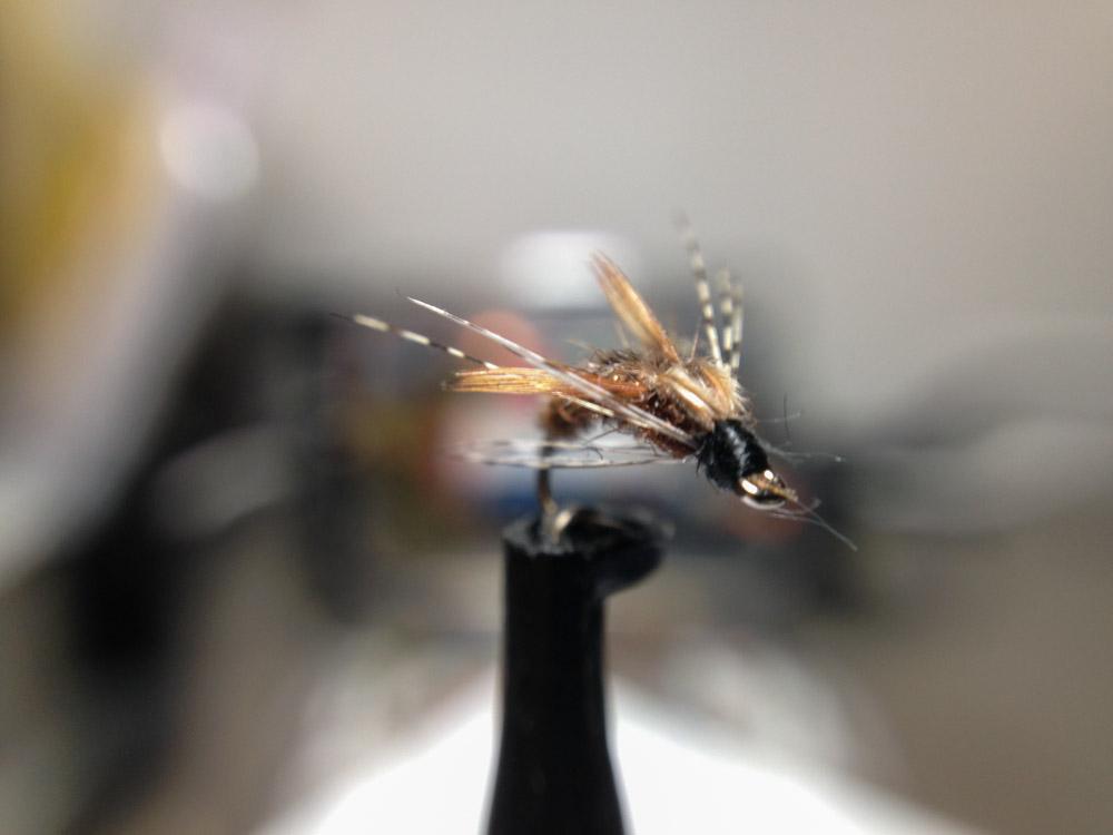 Bud's fly 4-23.jpg