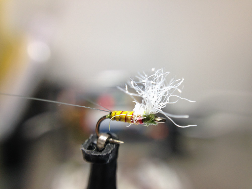 Bud's fly 5-10.jpg