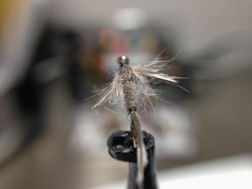 Bud's fly 6-7.jpg