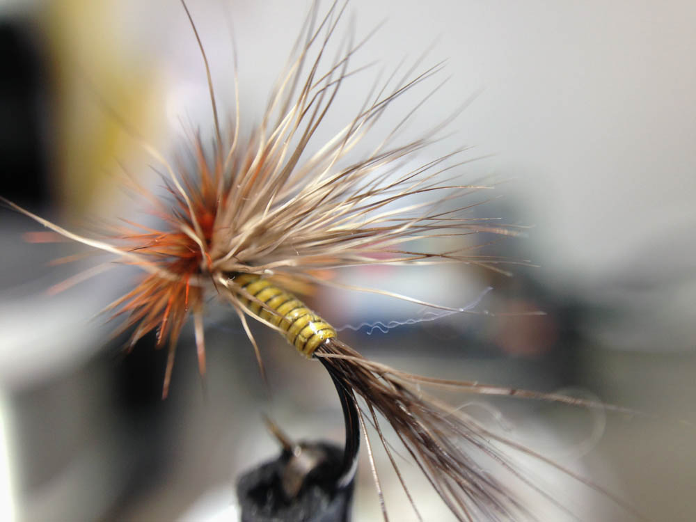 Bud's fly 7-7.jpg