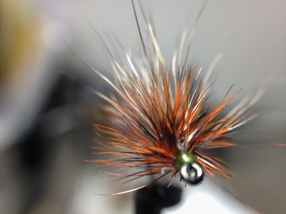 Bud's fly 7-16.jpg