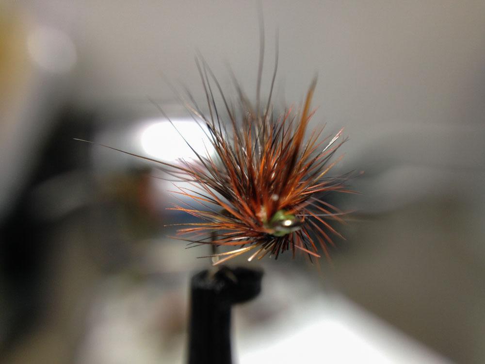 Bud's fly 7-19.jpg