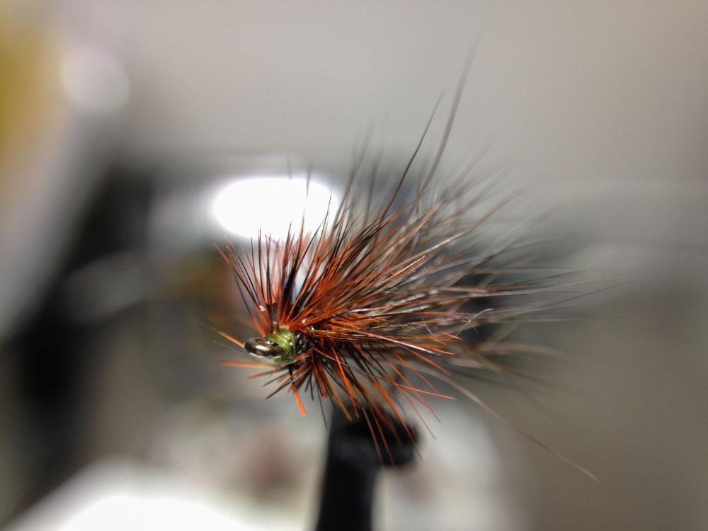 Bud's fly 7-21.jpg