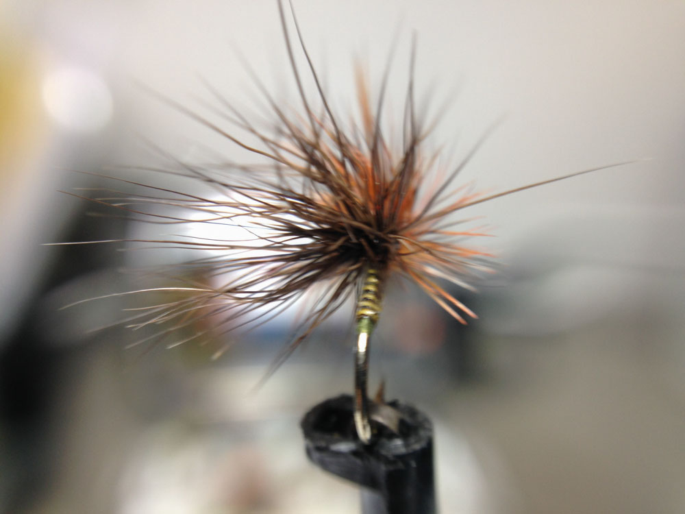 Bud's fly 7-25.jpg