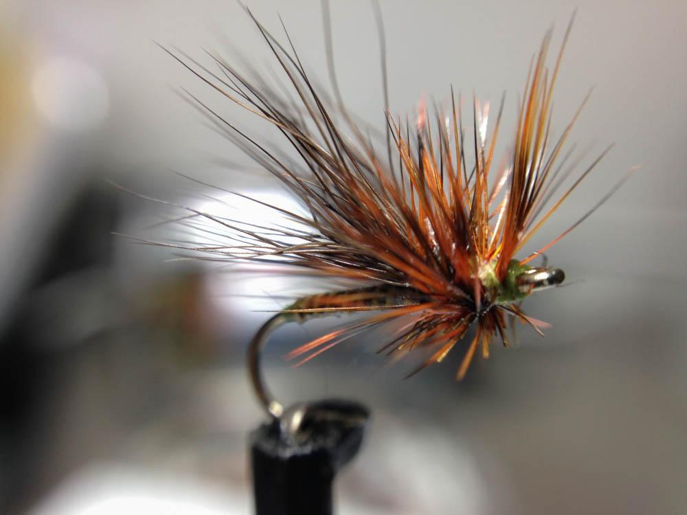 Bud's fly 7-29.jpg