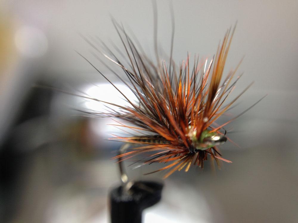 Bud's fly 7-30.jpg