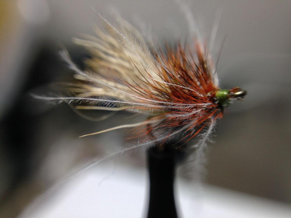 Bud's fly 7-31.jpg