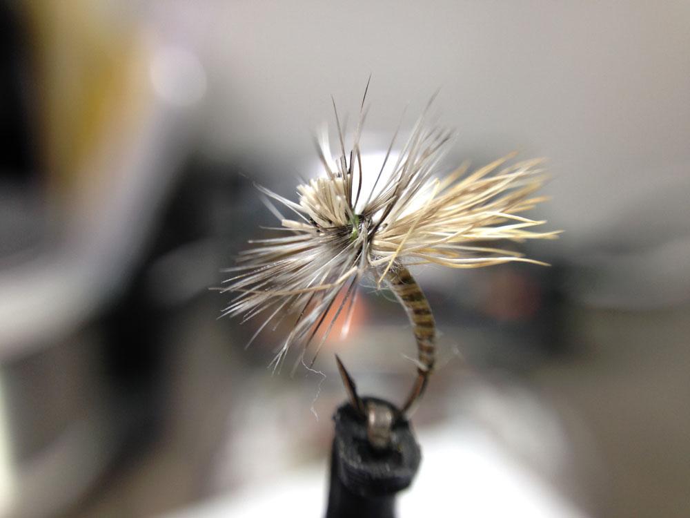 Bud's fly 8-3.jpg