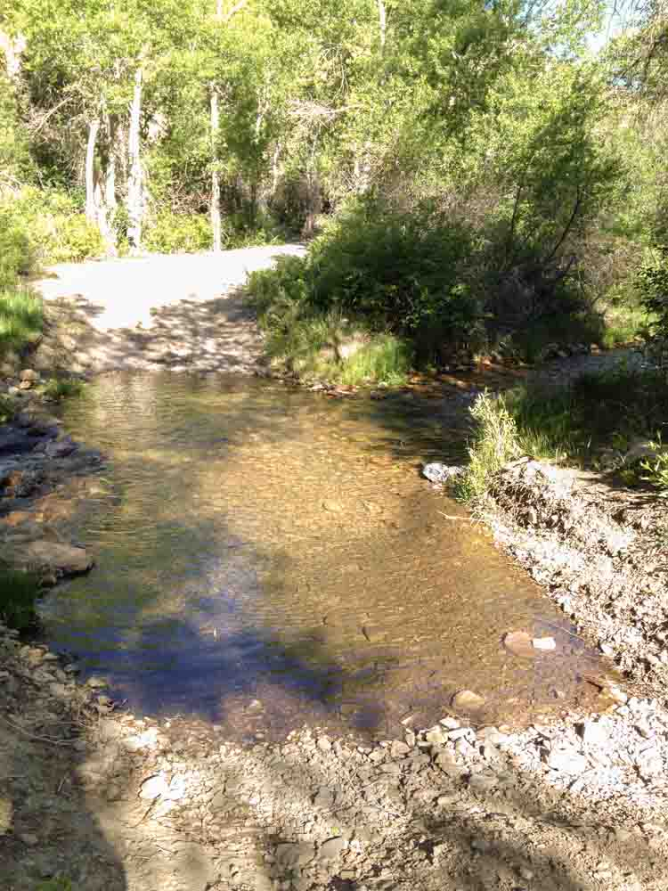 We didn't see any fish until we waded up another 100 feet from the first water crossing.
