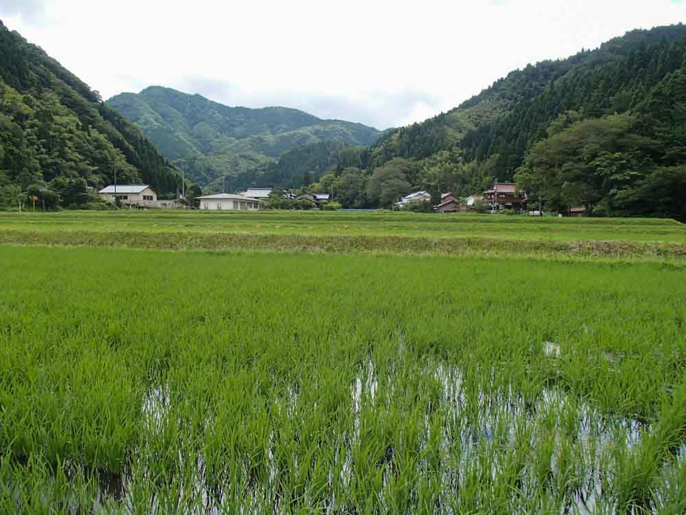 Sake rice fields for a more meditative fishing experience