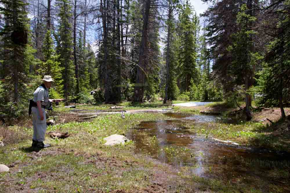 Jac's Creek-6.jpg