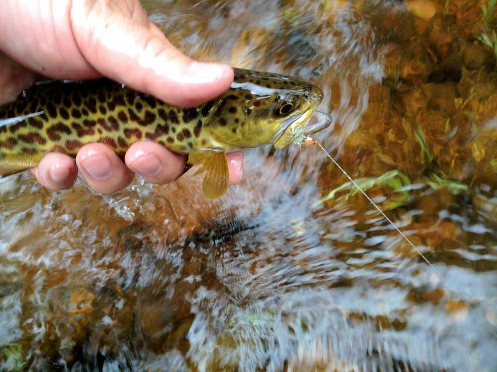 Jac's Creek-12.jpg