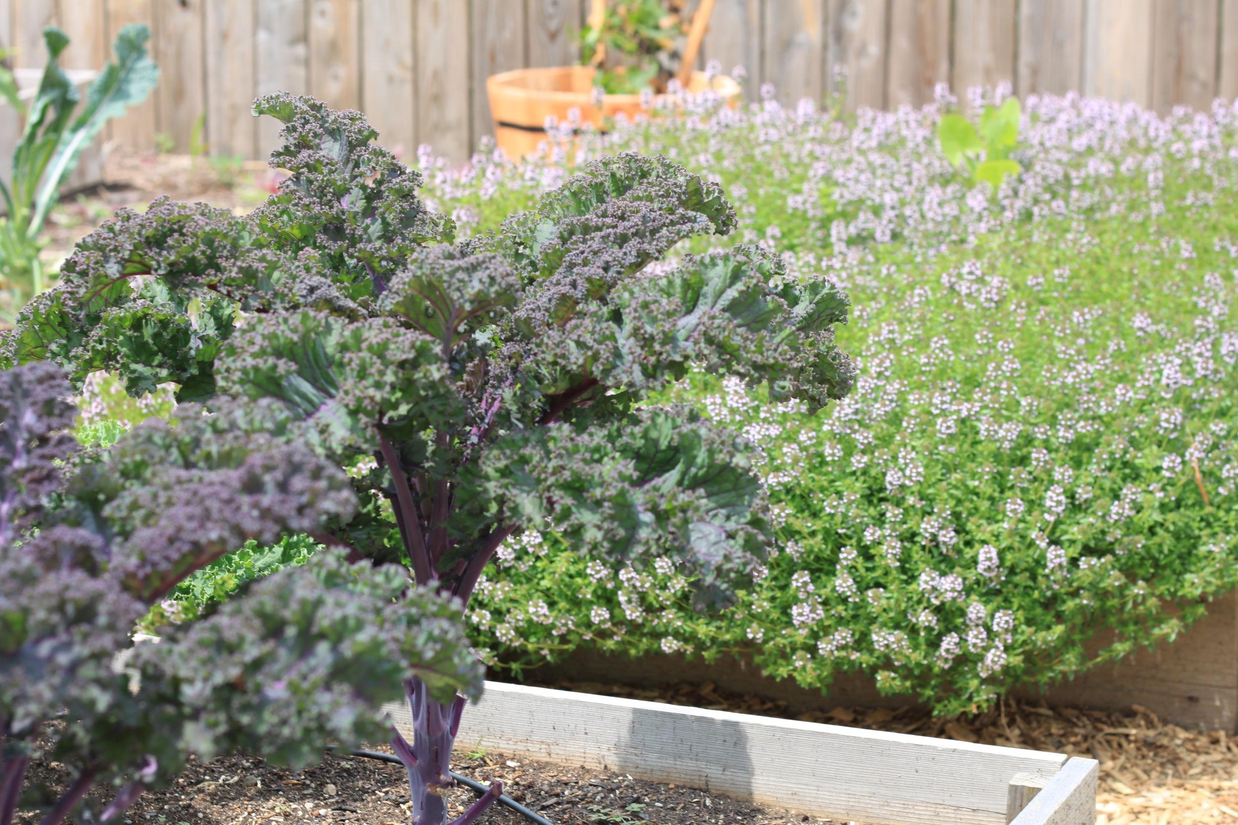 Big-Delicious-Planet-urban-organic-garden-in-West-Town