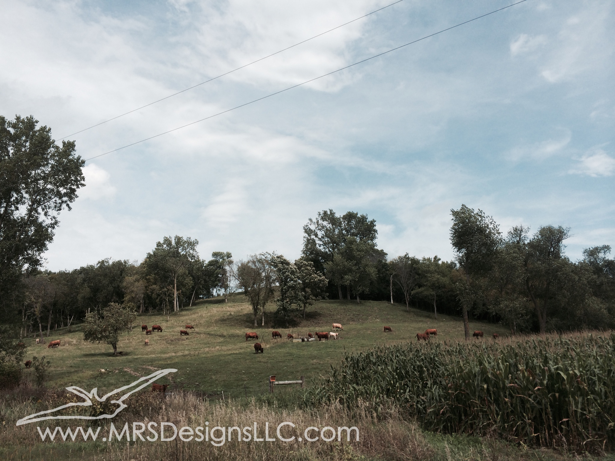 MRS Designs Blog - Cow Pasture