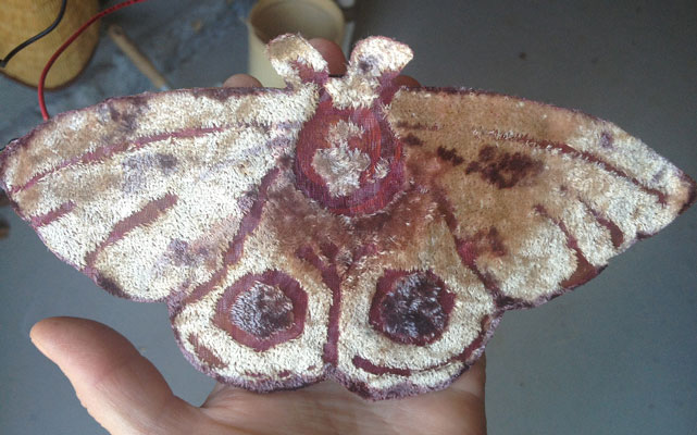 topside of a moth from   Electrolier (Summer Night)   2013