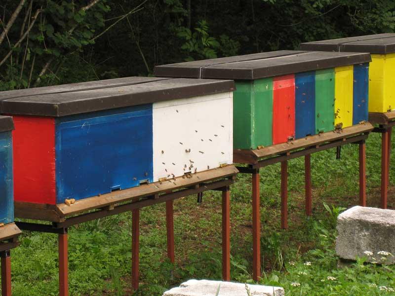 Slovenia-Bees.jpg