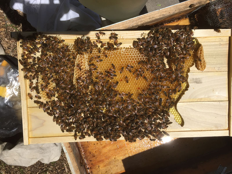 Pollination (USA) 2015
