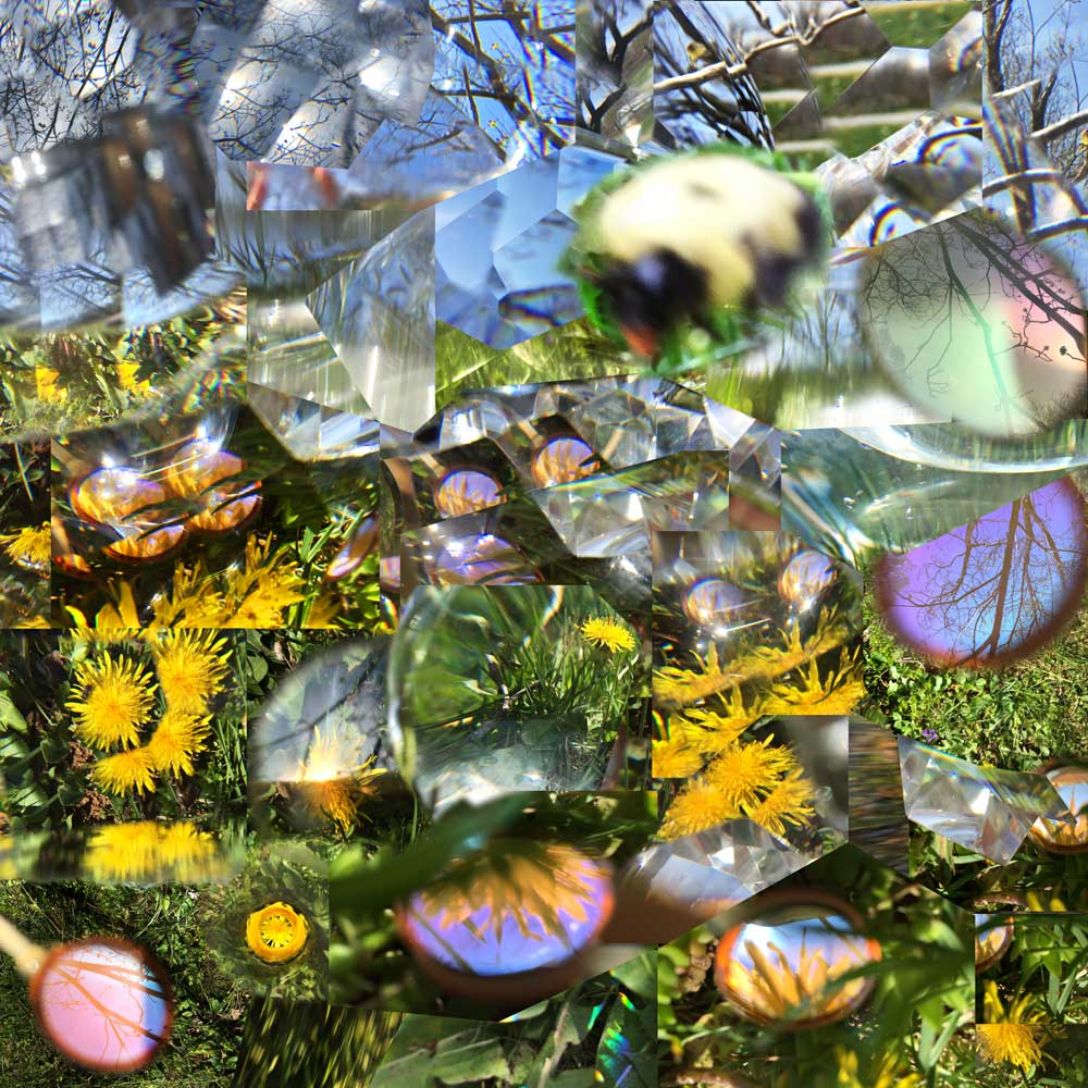 How a bumblebee remembers the location of a dandelion in Spring. Kelly Heaton, 2016