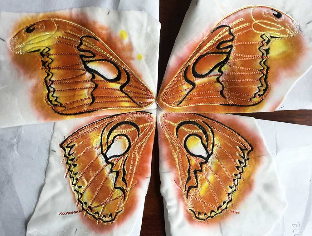atlas-moth_top.jpg