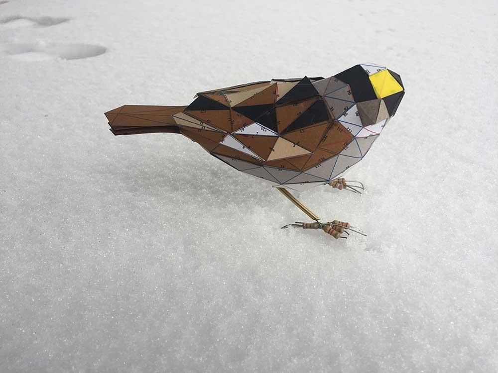Kelly Heaton sparrow