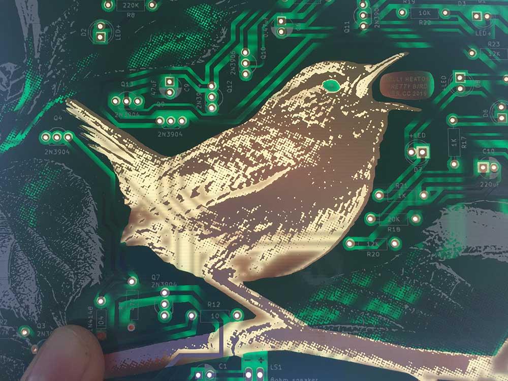K_Heaton_Pretty-Bird_CC-1.jpg
