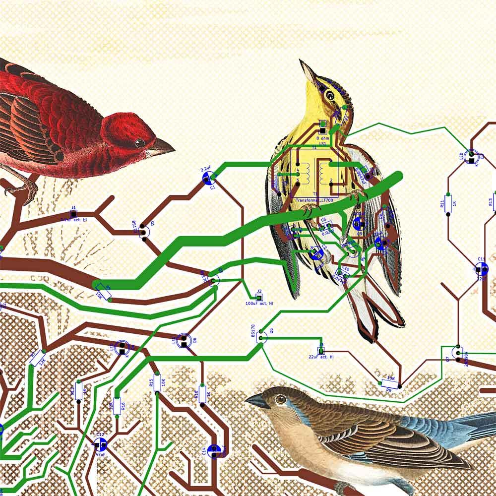heaton_detail_circuit-birds.jpg