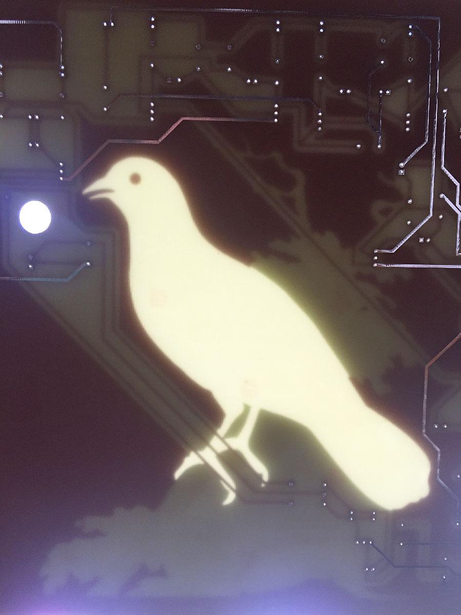 Ghost Bird, 2019