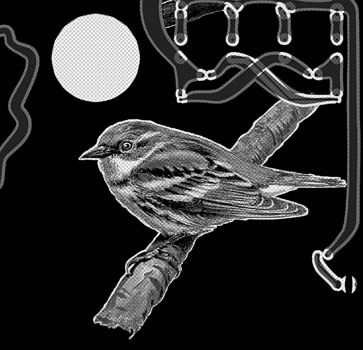 KHeaton_c-bird_process_sm.jpg