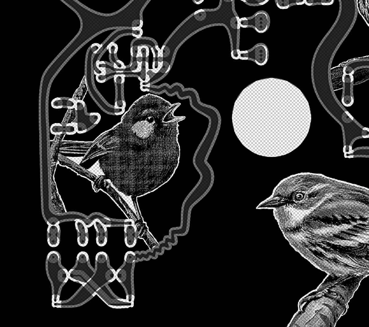 KHeaton_R-bird_process_sm.jpg